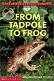From Tadpole to Frog 390語