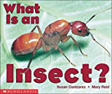 What is an Insect? 47語