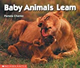 Baby Animals Learn 52語