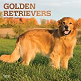 「Golden Retrievers 2019 Calendar」のサムネイル画像