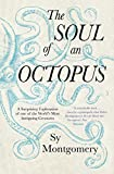 「The Soul of an Octopus」のサムネイル画像