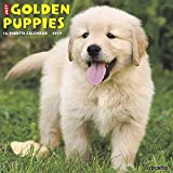 「Just Golden Puppies 2019 Calendar」のサムネイル画像