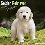 「Golden Retriever Puppies Calendar 2019」のサムネイル画像