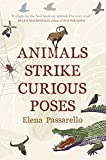 「Animals Strike Curious Poses」のサムネイル画像