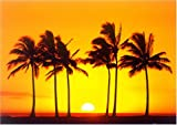 Hawaiian Sunset [PH-0187] [ポスター]